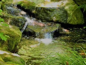 Pazifischer Nordwesten: Foto vom Japanischen Garten Portland
