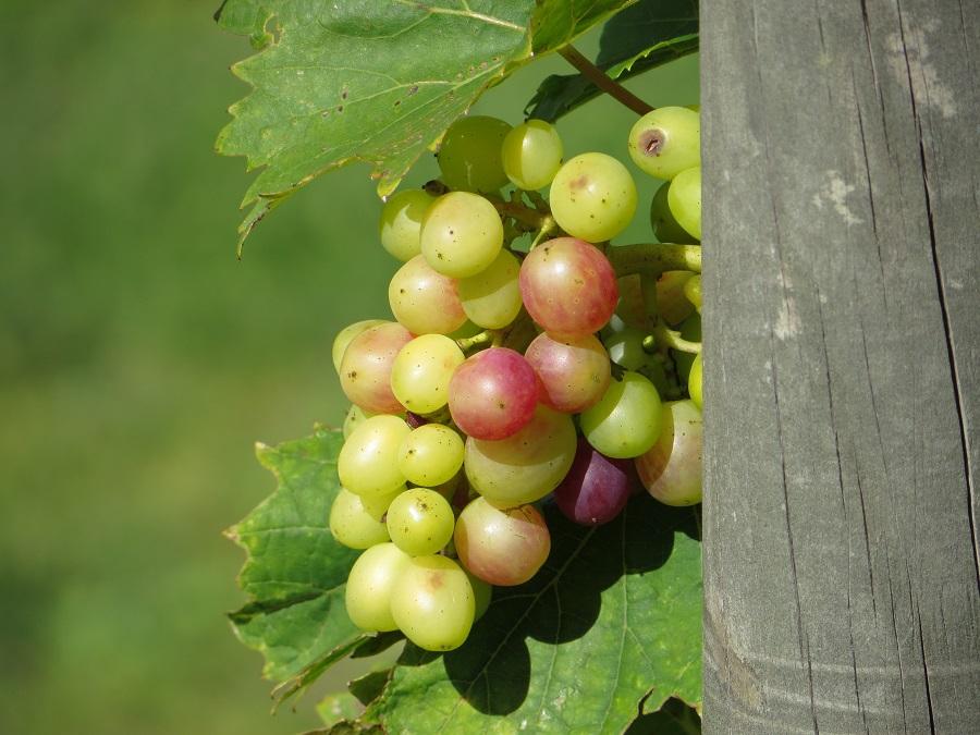 Schönste Orte Skandinavien - Nr. 8 Das Weingut Domän Sånana