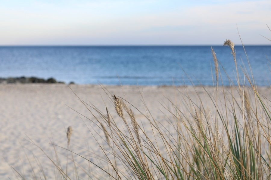 Zur Ergänzung des Textes. Strandhafer, Strand und Meer in Schärfe-Unschärfe-Relation.