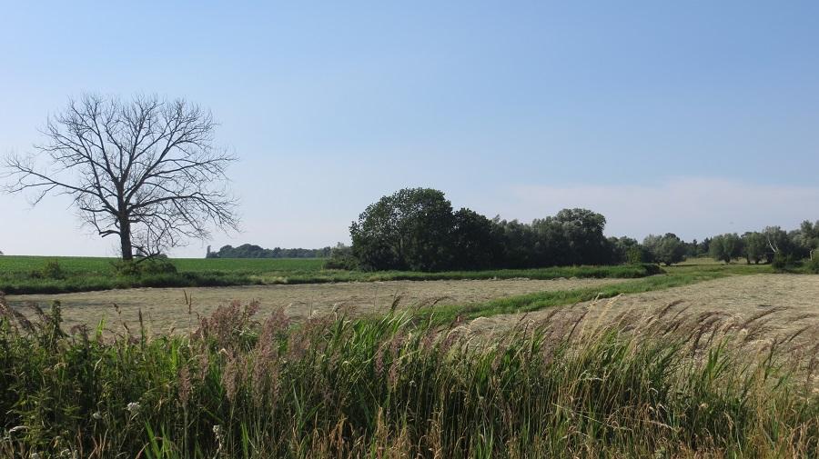 Wilhelmshof ist ein Geheimtipp auf der Karte von Usedom; Bild zeigt den Blick über die Wiesen.